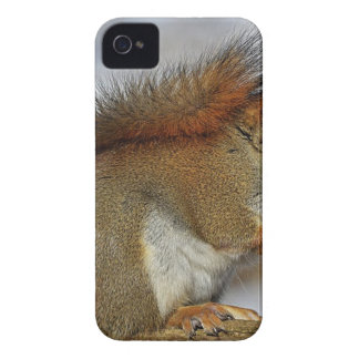 Small Squirrel Standing on Brown Wood iPhone 4 Cover