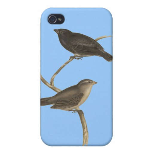 Small Tree Finch Case For iPhone 4