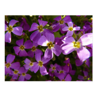 Small Violet Flowers Postcard