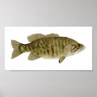 Smallmouth Bass Art Poster