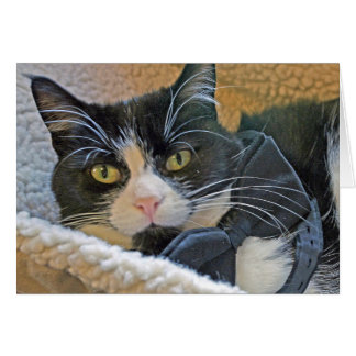 Smart Black and White cat card