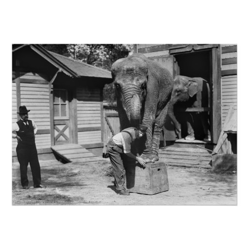 Smart Elephant in NYC, 1910s Poster