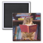 Smart Squirrel Reading a Dictionary Refrigerator Magnets