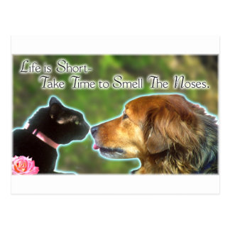 Smell the Noses Postcard