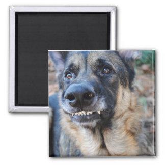 Smile! German Shepherd Magnet