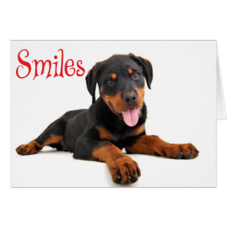 Smiles Rottweiler Puppy Dog Thinking of You, Hello Card