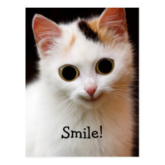 Smiley Cat Postcard
