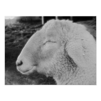 Smiley Sheep Poster