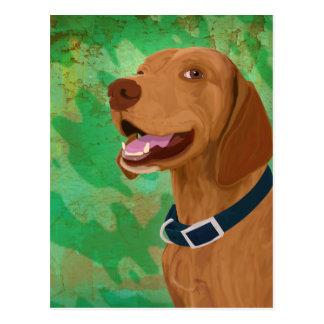 Smiling Brown Vizsla on Green Background Postcard