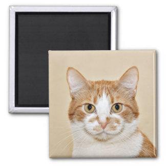 Smiling cat magnet