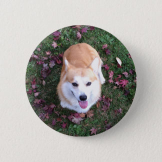 Smiling corgi photo pin