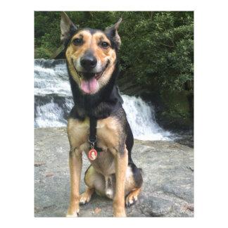 Smiling Dog on Rock Letterhead