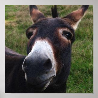 Smiling Donkey Print