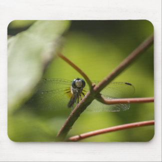 Smiling Dragonfly Mouse Pad