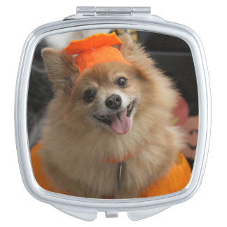 Smiling Foxy Pomeranian Puppy in Pumpkin Halloween Compact Mirror