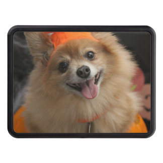 Smiling Foxy Pomeranian Puppy in Pumpkin Halloween Trailer Hitch Cover