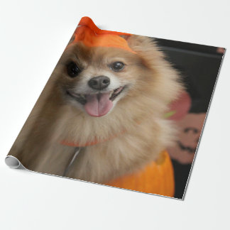 Smiling Foxy Pomeranian Puppy in Pumpkin Halloween Wrapping Paper