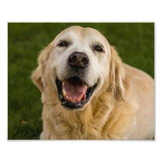 Smiling Golden Retriever Portrait Photo Print