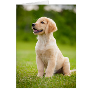Smiling Golden Retriever Puppy Greeting Card