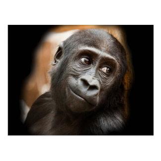 Smiling Gorilla Baby Postcard