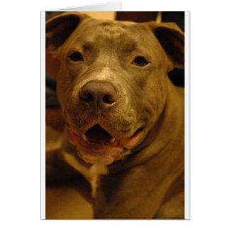 Smiling Pitbull Greeting Card