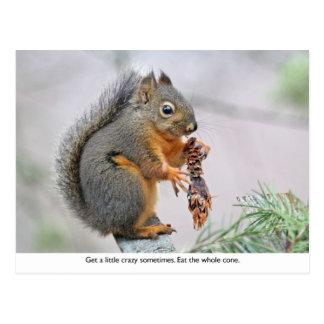 Smiling Squirrel Eating Pine Cone Postcard