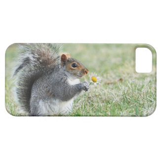 Smiling Squirrel with Daisy iPhone 5 Covers