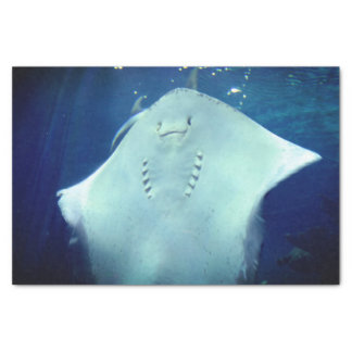 Smiling Sting Ray  Gift Wrap Tissue Paper