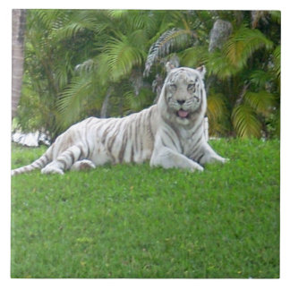 Smiling White Tiger and Palm Trees Ceramic Tiles