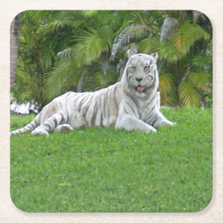 Smiling White Tiger and Palm Trees Square Paper Coaster