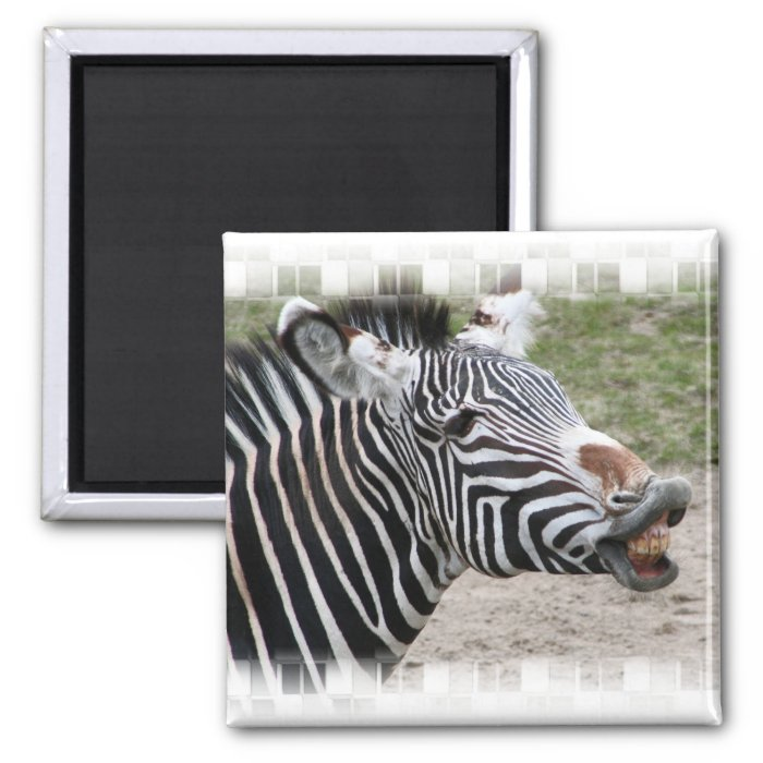 Smiling Zebra Magnet