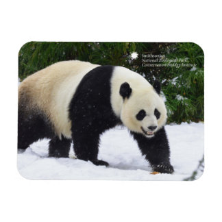 Smithsonian | Giant Pandas In The Snow Rectangular Photo Magnet