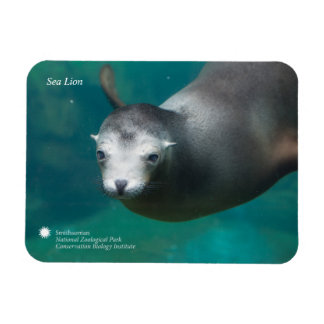 Smithsonian | Sea Lion Magnet