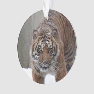 Smithsonian | Sumatran Tiger Damai