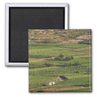 Smokvica vineyards on Korcula from the Toreta Square Magnet