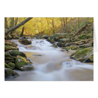 Smoky Mountain Stream Card