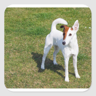 smooth fox-terrier-full square sticker