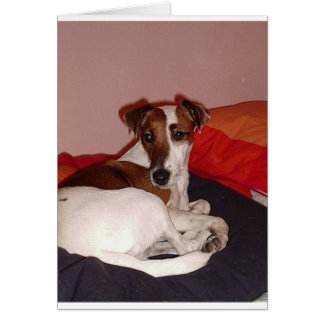 smooth fox terrier laying card