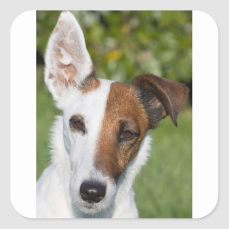 smooth fox-terrier square sticker