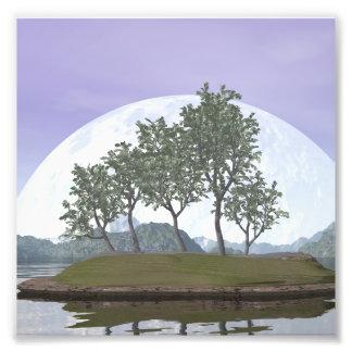Smooth leaved elm bonsai tree - 3D render Photo Print