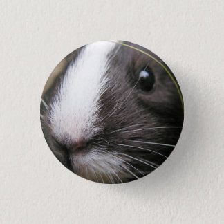 Smooth, Short Hair, Black and White Guinea Pig 1 Inch Round Button
