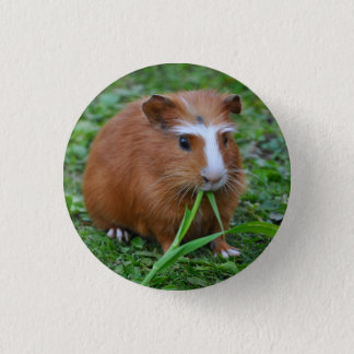 Smooth, Short Hair, Red and White Guinea Pig 1 Inch Round Button