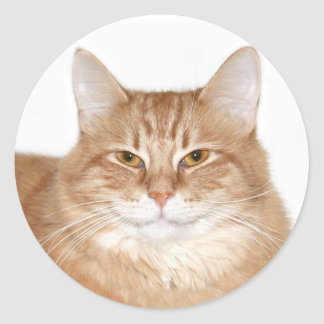 Smug smiling cat classic round sticker