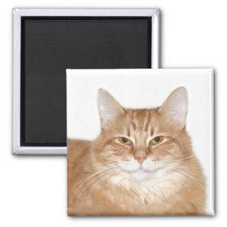 Smug smiling cat magnet