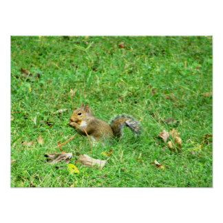 Snack Time For a Squirrel Poster