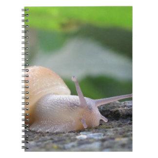 snail-3555 spiral notebook