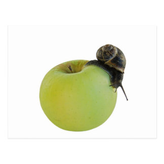 Snail and apple postcard