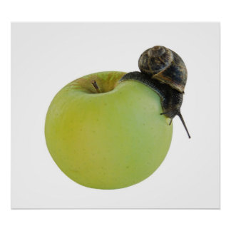Snail and apple poster