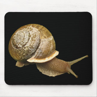 Snail and Shell Mouse Pad