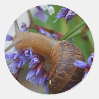 Snail Animal Classic Round Sticker